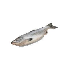 Поставщик рыбы и морепродуктов